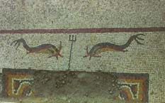 The dolphin mosaic